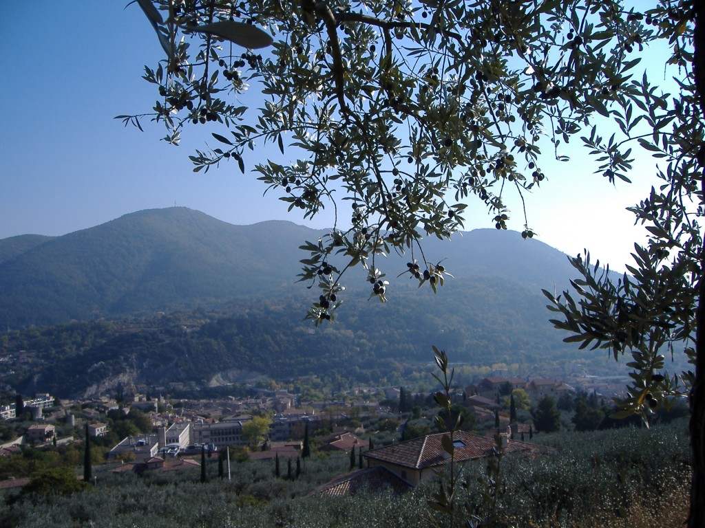 A view over Nyons, with an olive tree in the immediate foreground and the silver-green leaves of the tops of further olive trees at the bottom of the picture.