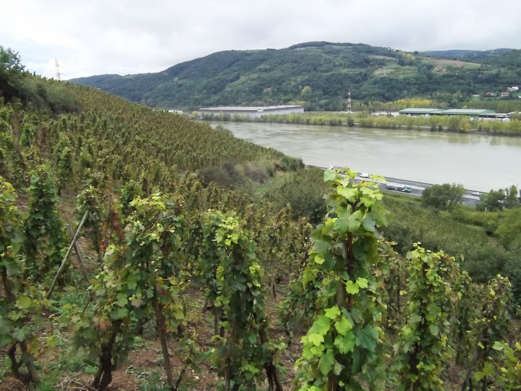Looking out over the vineyards of Seyssuel with the Rhone flowing past.