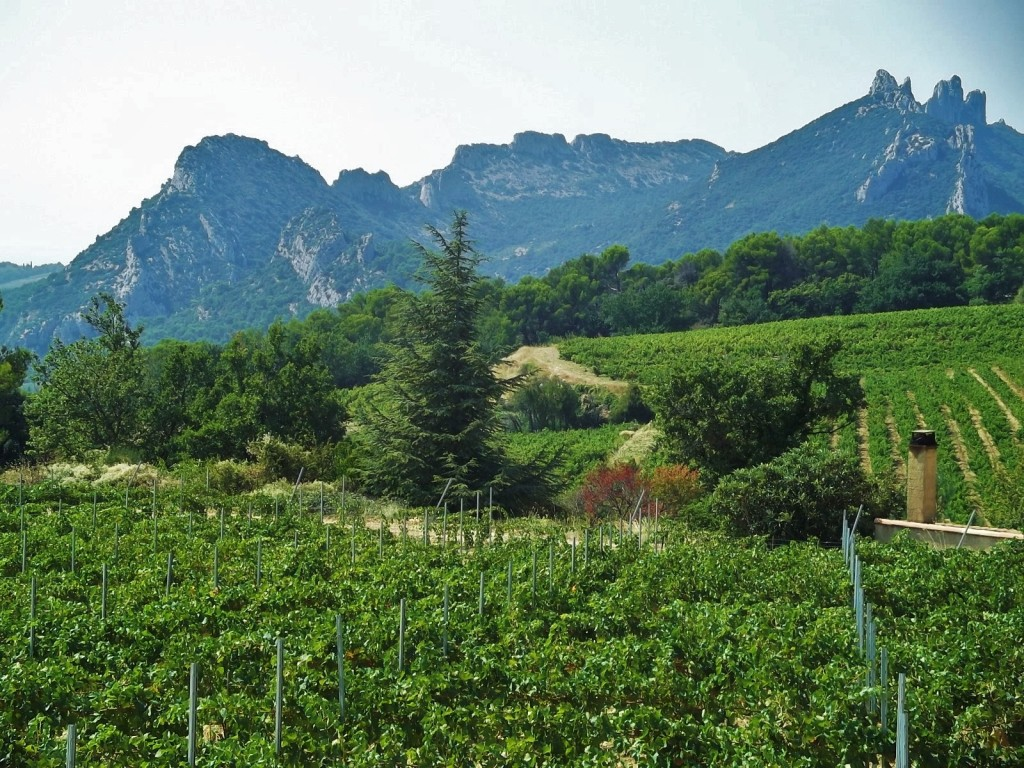 Looking across the vineyards to the Dentelles de Montmirail, near the village of Lafare.