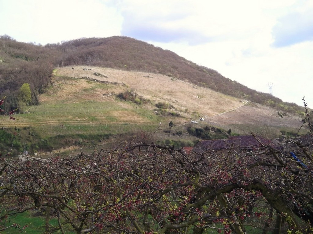 A hillside vineyard in the village of Gervans, early March. Compare this with the flatter vineyards in the photo of Christelle Betton.