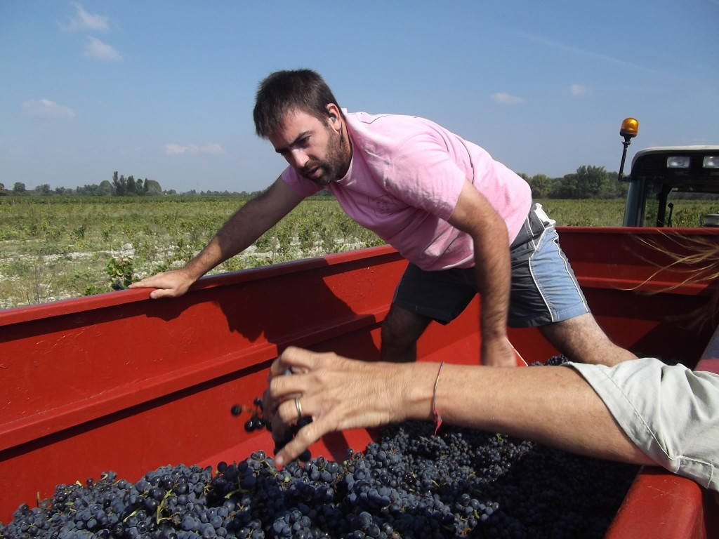Thomas bringing in the harvest at Domaine Rouge Bleu, the stand out estate in Sainte Cécile.